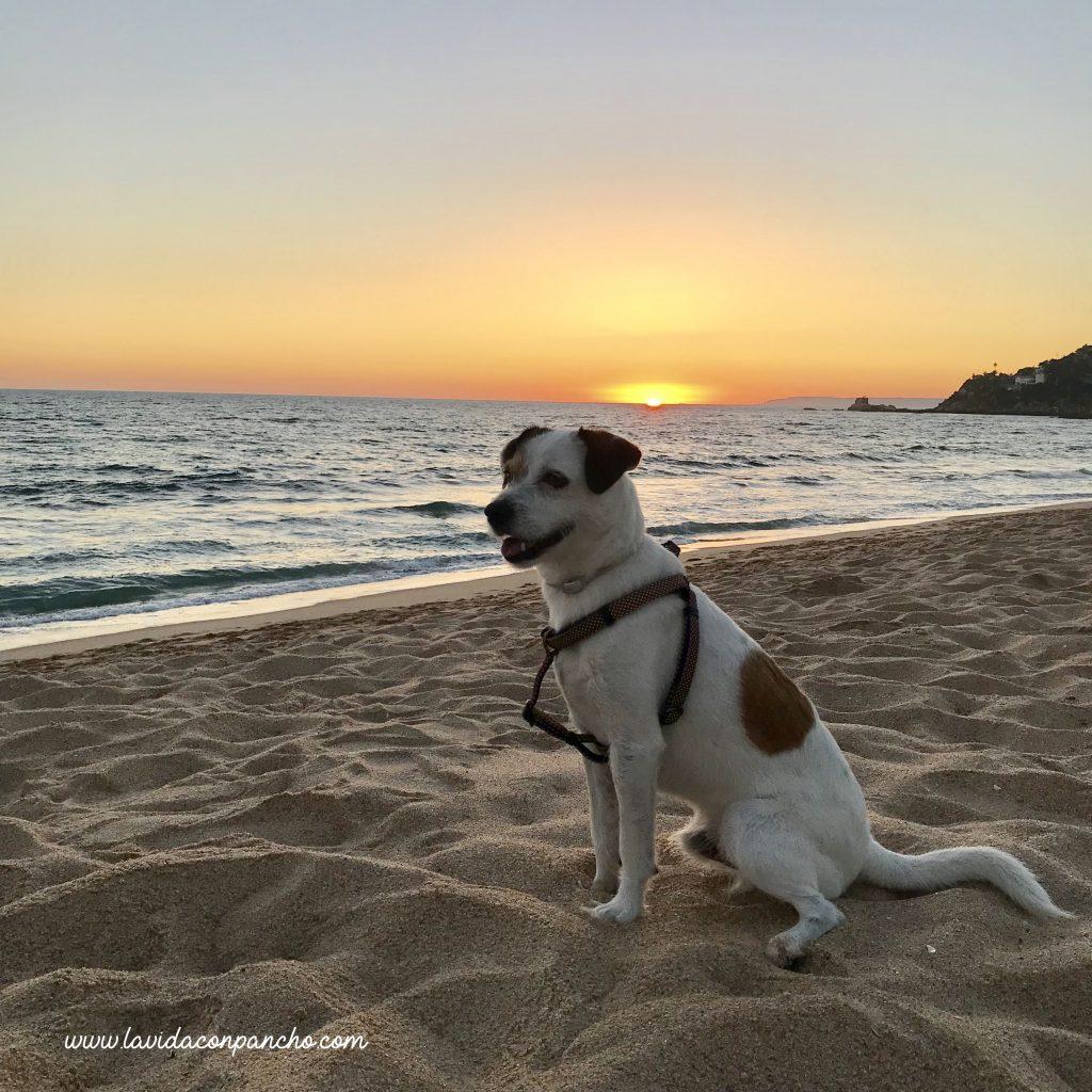 playa-de-los-alemanes-y-perros