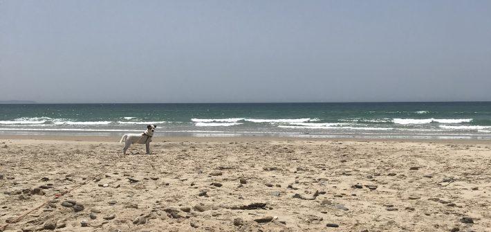 playa-el-retín-perros