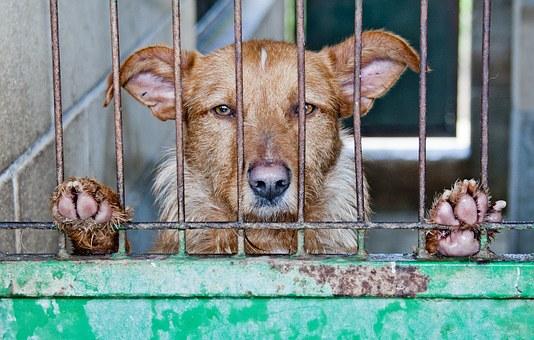 adopción-de-perro