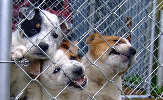 cachorros-en-adopción