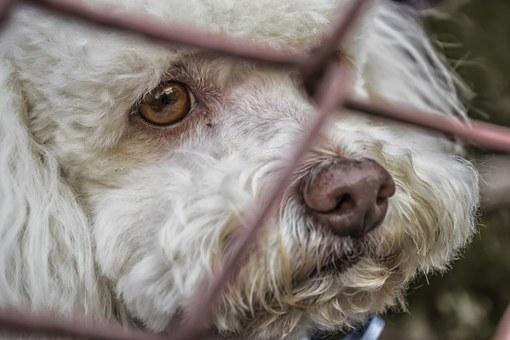 adoptar-perros