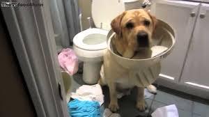 perro-haciendo-destrozos