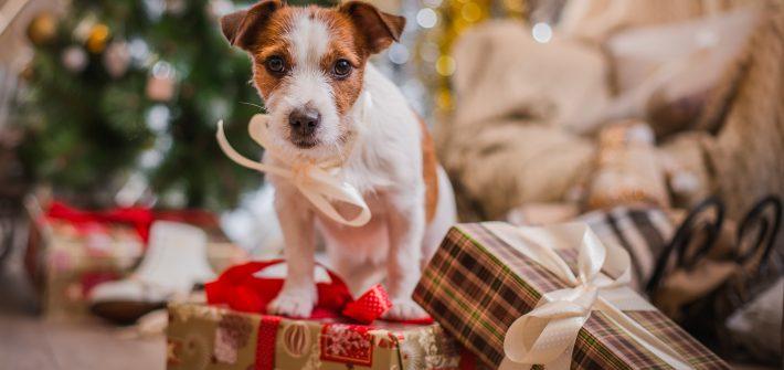 regalos-navidad-perros