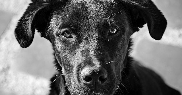 adoptar-perro
