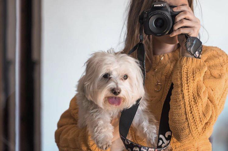 fotografiar-perros