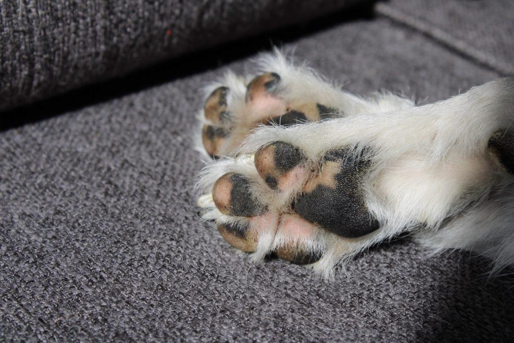 hidratar-almohadillas-perro
