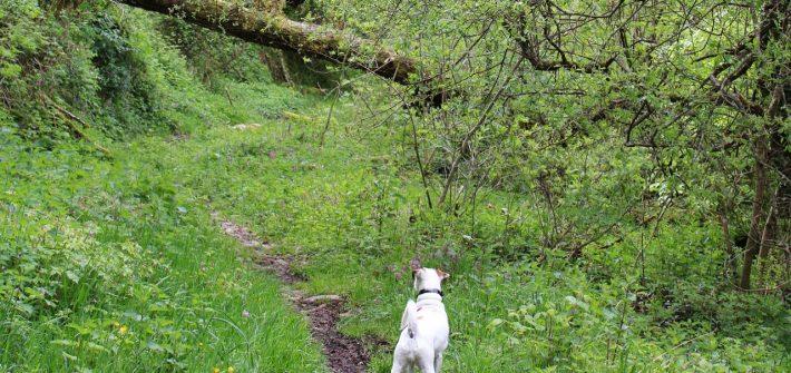 senderismo-con-perros
