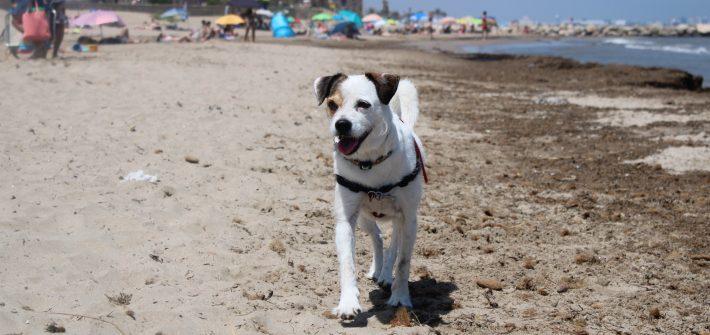 crema-solar-perros