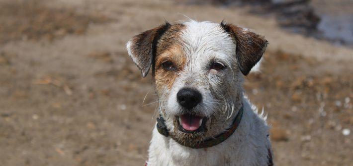 playa-perros-valencia