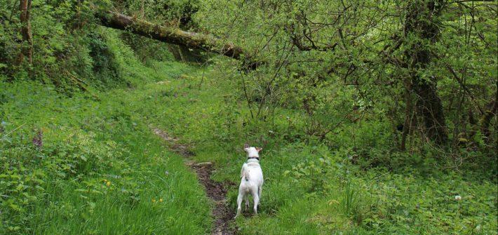 mindfulness-pasear-con-mi-perro