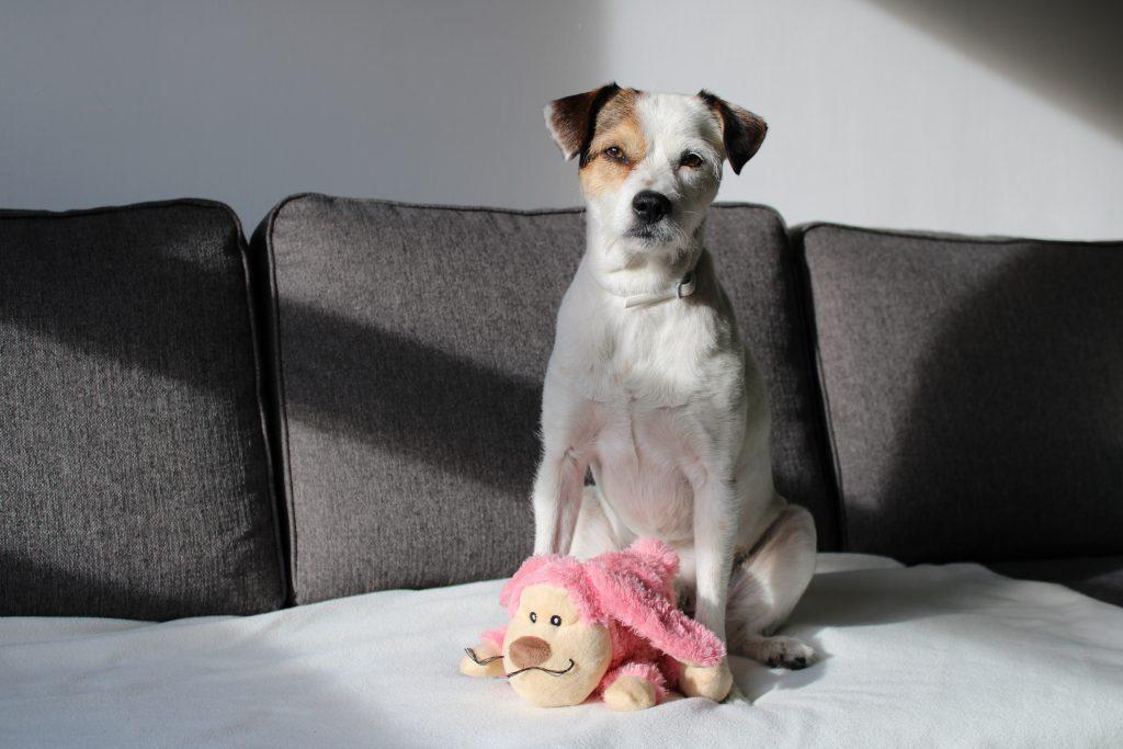 perros-y-covid19