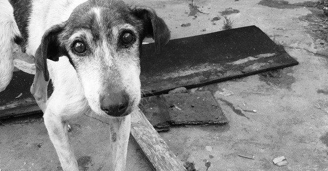 perros-abandonados-confinamiento