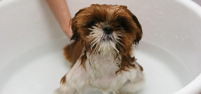 perro-baño