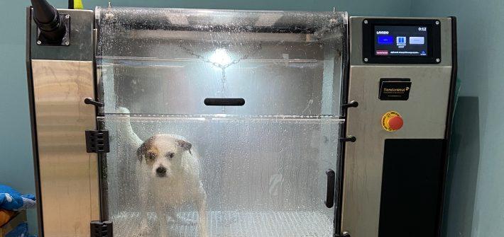 Maquina-de-lavar-perros