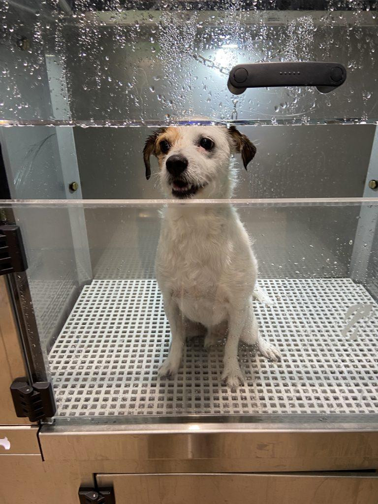 máquina-lavado-perros-gasolinera