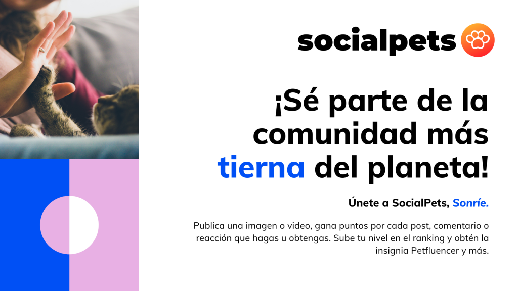 perro-app