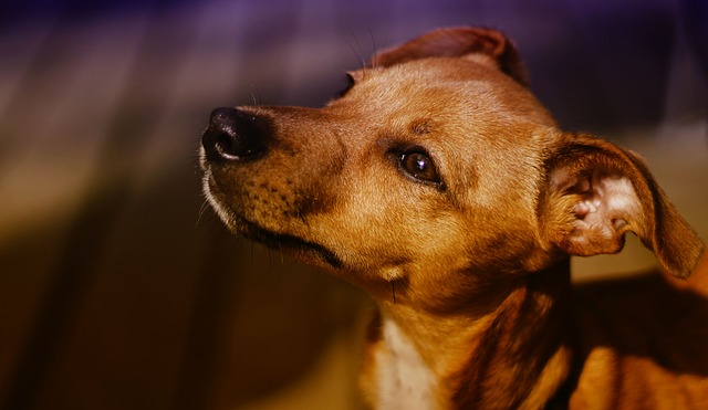perros-mestizos