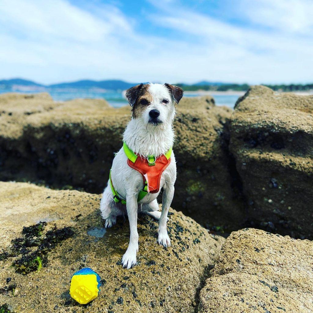 playa-perro-galicia