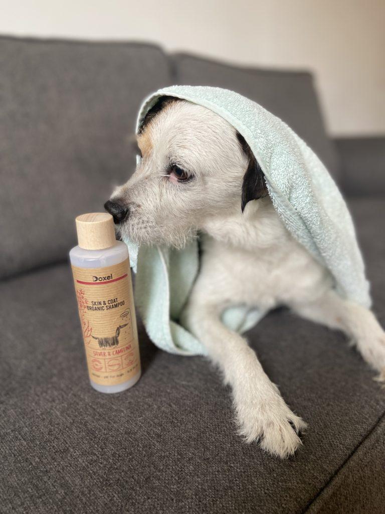 las mejores marcas de shampoo para perros