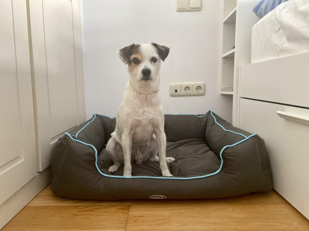 cama para perros medianos
