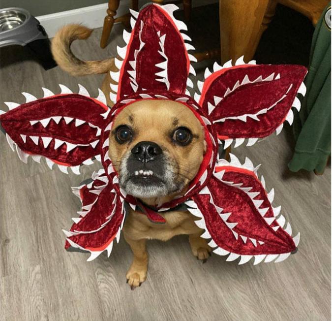 disfraz halloween perro